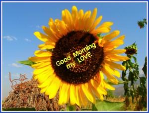 G Morning m love